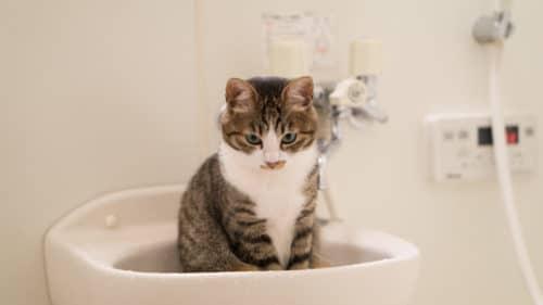 iPhone 7の耐水性能を雨・トイレ・お風呂・プール・海別に紹介!